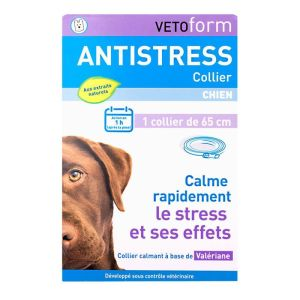 Collier antistress chien