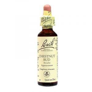 Chestnut bud n° 07 20ml